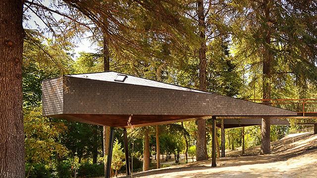 """""""Змийска къща"""" по дърветата в Португалия"""