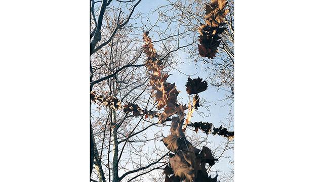 """Falling Leaves""; Sea Garden, Burgas"